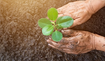 How to Reward Employees with CSR Actions that Matter: Introducing Sociabble Trees