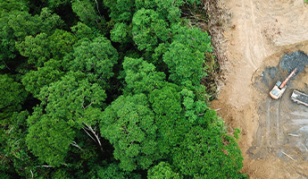 The Fight Against Deforestation: Sociabble Trees & CSR